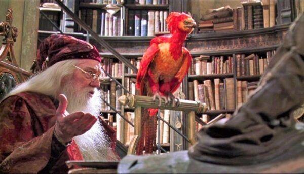fumseck, dumbledore