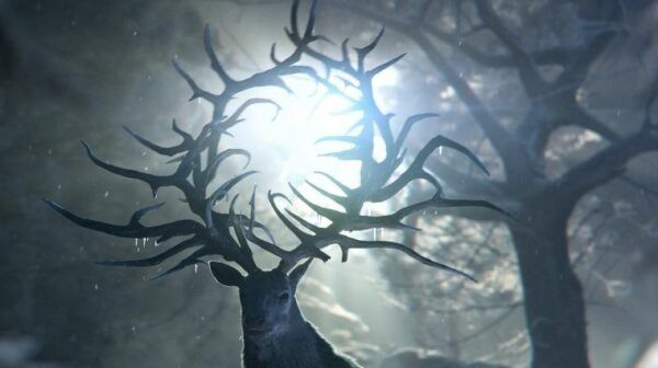 Cerf Shadow and Bone