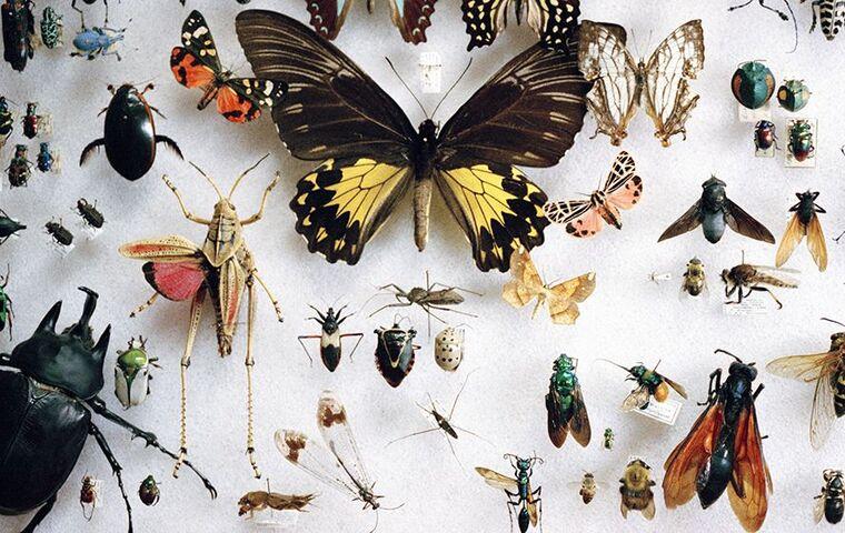 Toutes sortes d'insectes