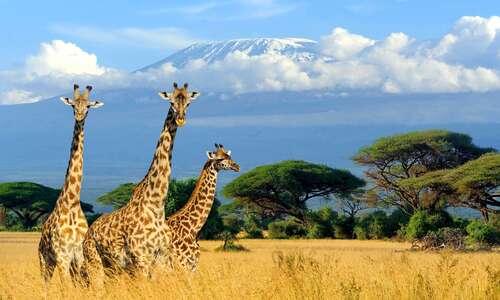 On va faire un safari !